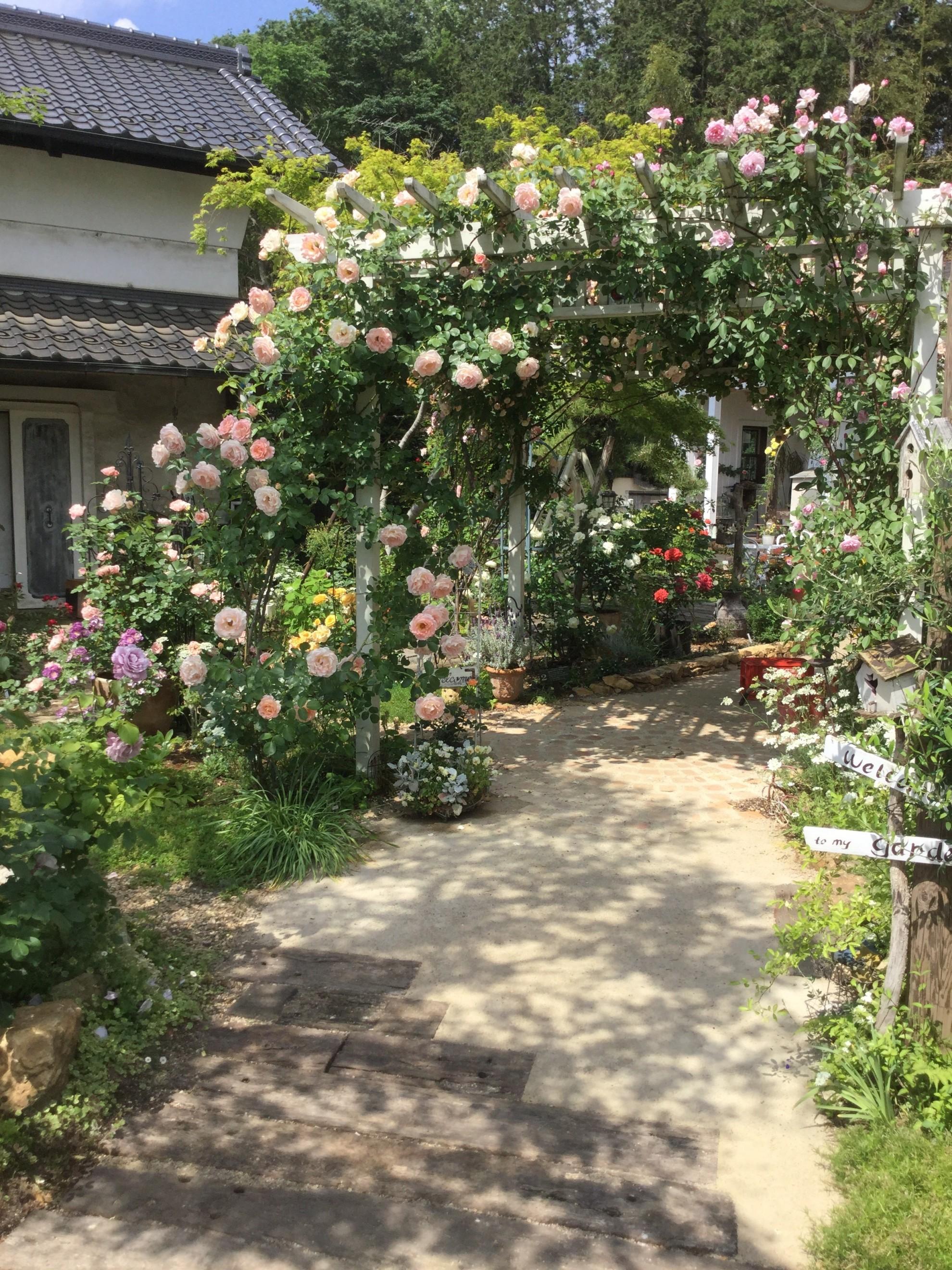 バラ蔵の庭1 埼玉県(狭山市)-21