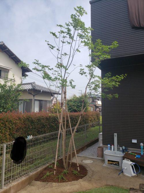 ウッドフェンスの庭 造園工事(埼玉県の事例)-15